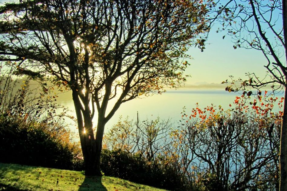 Tree Shine    T3762